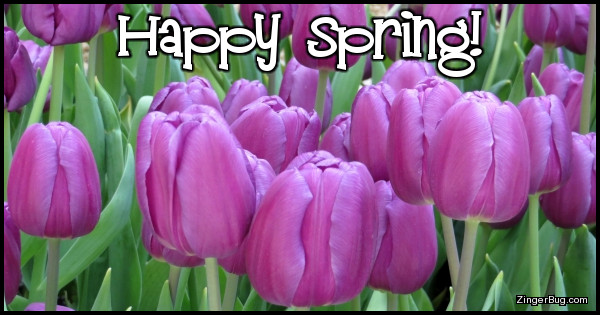 Happy Spring Purple Tulips Glitter Graphic, Greeting ...